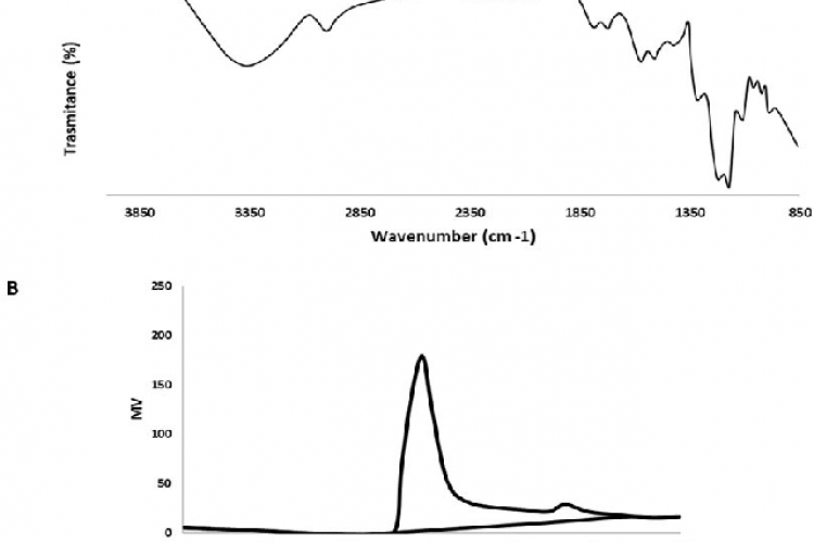 (A) FT-IR spectrum of polysaccharide (PLY); (B) Molecular weight of PLY determined by HPGPC